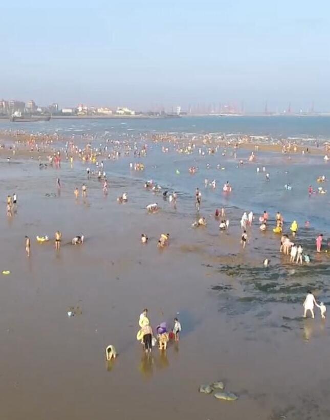 畅享春日|捡贝壳、抓海星……日照海边赶海忙