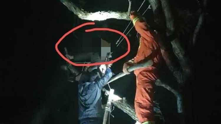 淄博一80岁老人爬树摘香椿被困2个多小时