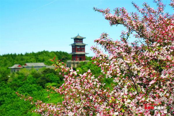 保护泰山景区植被 打造繁花岱顶风光