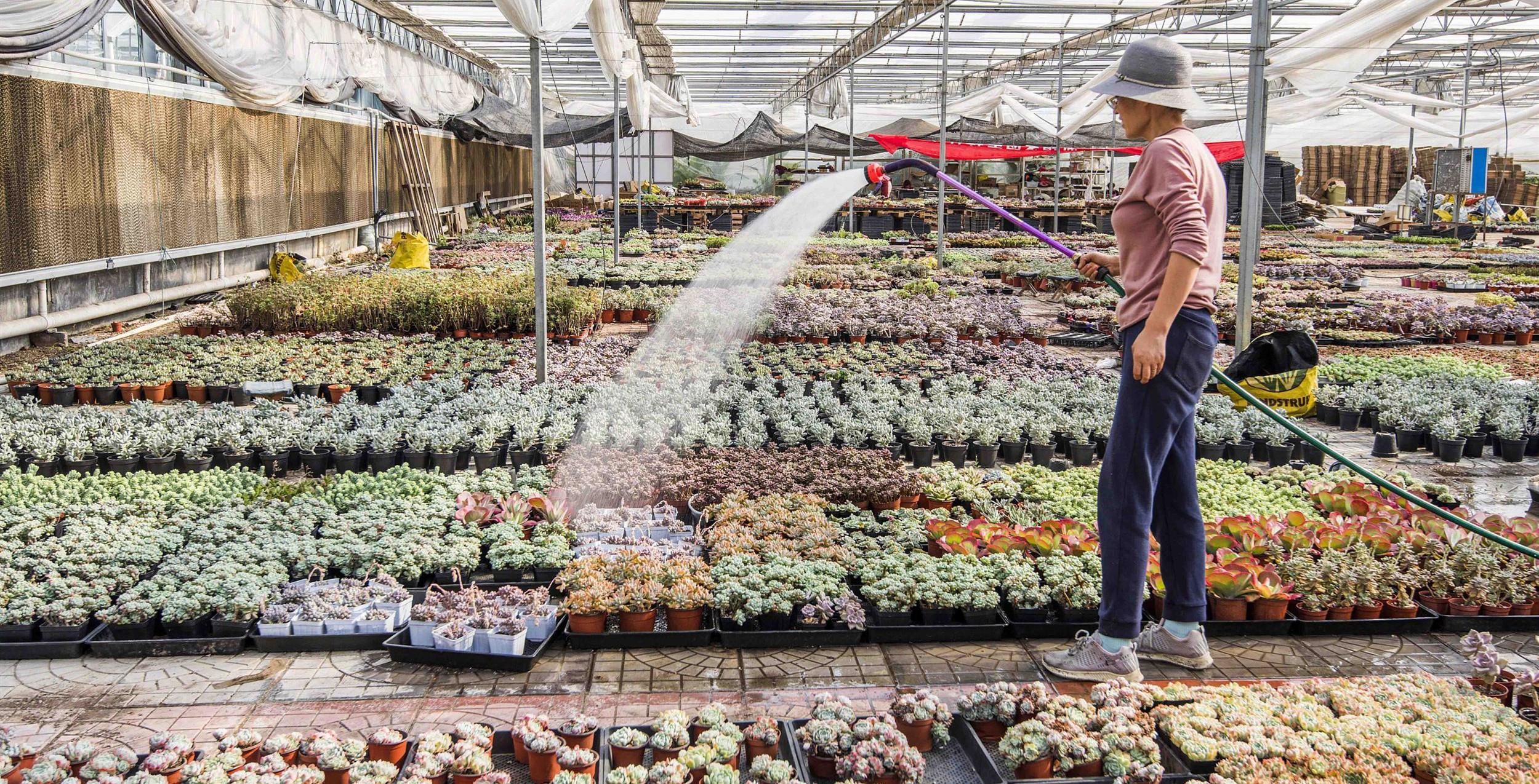 青州多肉年产超8亿株、产值达20亿元!占据全国半壁江山