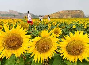 """青州废弃矿坑""""蝶变""""美丽花园"""