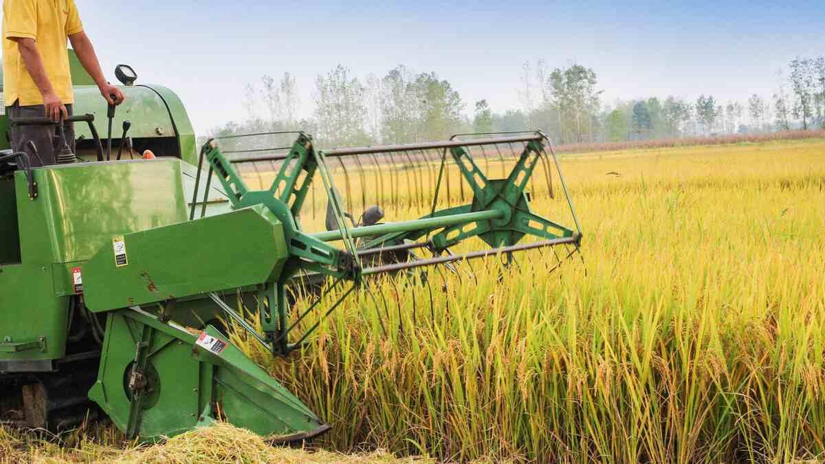 种业振兴行动方案即将下发