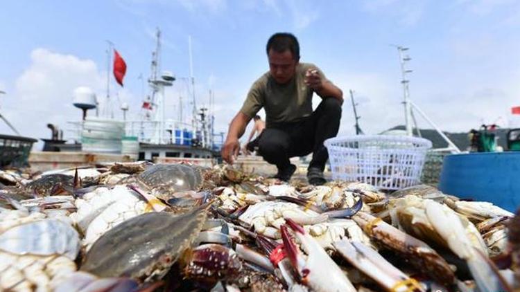 山东青岛:开渔时节喜丰收 海鱼虾蟹卖到全国各地