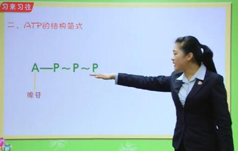 """高中生物——细胞的能量""""通货""""ATP"""