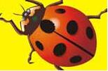 简笔画—瓢虫的画法