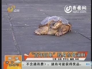 """""""百年巨龟""""现身东昌湖畔"""