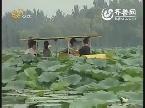 旅游资讯:章丘白云湖 荷叶茶飘香
