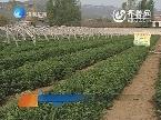 济南:科普惠农工程促进农民增收