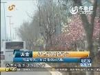 青岛植树过密遭质疑 阳光政府两天内整改