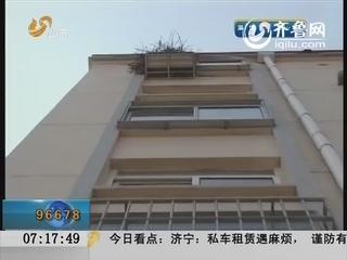 威海:鹰占鹊巢 真实上演