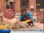 济宁:十年如一日 专门收养流浪狗