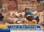 十年如一日 收养100只流浪狗