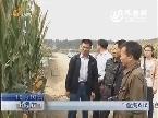 """""""登海618""""创早产玉米产量新高"""