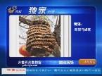 独家拍客:菏泽——巨型马蜂窝