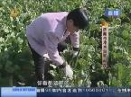 济南:自家菜园蔬菜烂在地里 村民怀疑农药厂污染?