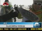 吉林:查干湖冬捕 八方游客冰湖抓鱼