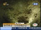 临淄:麦田惊现被炸深洞 专家称或是盗墓行为