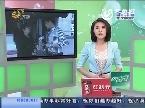 济南:八龄童患重病 亲妈阻姐妹间捐骨髓