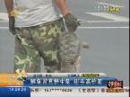 淄博:鳄鱼冒充野生龟 街头高价卖