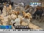恶犬伤人事件频发 济南强化烈性犬管理