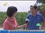 章丘:鸭棚遭遇大水 损失三十多万