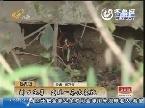 济南:门口洗菜 发现一条大花蛇