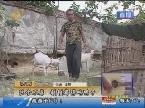 济南:伙食不孬 顿顿都得吃鸭子