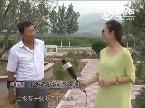 中国梦·山东县域经济报道 走进吴村镇