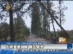 大树歪倒挡路 路人受伤