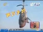 """日照:渔民出海 """"捡""""回十吨大鲨鱼"""