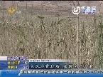 宁阳县:大风冰雹过后 庄稼受灾严重