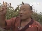 周迅朱亚文电视剧《红高粱》激情野战片段