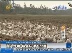 济南:盲人养鹅 绿色环保无公害