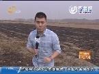 沂南:杨大哥所有积蓄都用来种植黑松