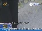 淄博:姑娘公园遛弯 被藏獒袭击