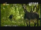 2013年12月01日《唐三彩》:千年阿胶