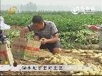 缺水地长出好土豆