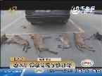 淄博:丢人!馋狗肉进了派出所