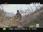 2013年12月06日《成长关注》:赵氏孤儿