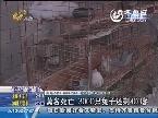 苍山:莫名死亡 3000只兔子还剩400多