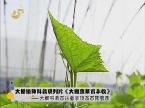 大棚植保科普系列片《大棚蔬菜看丰收》——大棚移栽苗注意事项及苗期管理