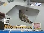 聊城:买条草鱼 竟然存了一肚子水