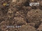 大棚植保科普系列片《大棚蔬菜看丰收》——土壤健康 合理施肥