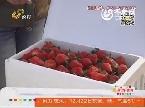 潍坊:草莓之困:南方低价草莓强势来袭