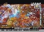 乡村季风海外版:日本乡村游 富士山河口湖红叶节