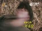山东卫视独家跨年巨献《闯关东前传》宣传片兄妹篇
