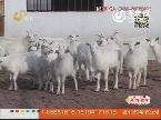 关注首届中国奶山羊产业高层论坛:奶山羊发展迎来新机遇