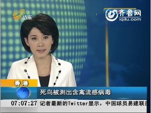 香港:死鸟被测出含禽流感病毒