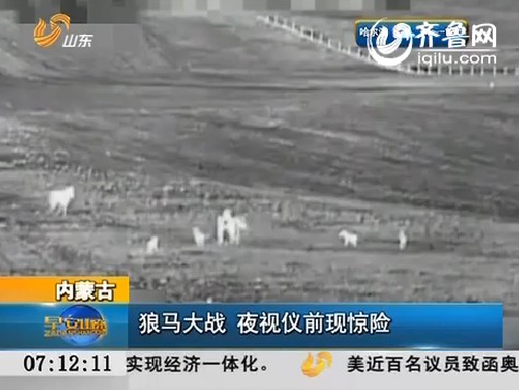 内蒙古:狼马大战 夜视仪前现惊险