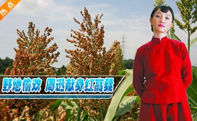 山东卫视《红高粱》首发片花 周迅朱亚文野地偷欢